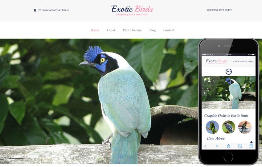 Exotic Birds a Animal Category Flat Bootstrap Responsive Web Template Mobile website template Free