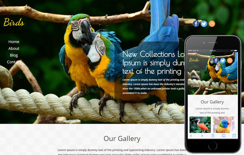 Birds a Animal Category Flat Bootstrap Responsive Web Template Mobile website template Free