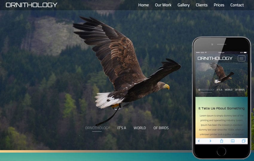 Ornithology An Animal Category Flat Bootstrap Responsive Web Template Mobile website template Free